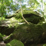 Moss covered rock in Blue Mountain National Park, New South Wales