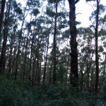 Forest on Mt. Oberon in Wilson's Promontory National Park, Victoria