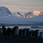 Sunset View with Penguins on Brown Bluff, Antarctica Continent