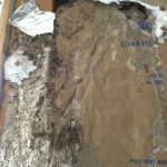 termite damage in master bedroom on moisture barrier paper
