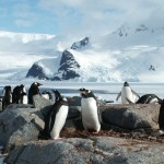Penguins and View on Pleneau Island, Antarctica