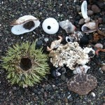 Sea Urchin remains on Floreana Island