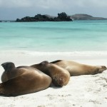 Galapagos sea lions on Espanola Island