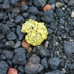 Lichen on Deception Island, Antarctica