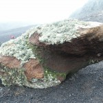 Rock with Moss on Deception Island, Antarctica