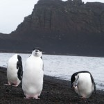 Penguins and View on Deception Island, Antarctica