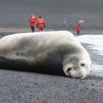 Seal on Deception Island, Antarctica