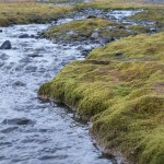 Moss by Stream on Robert Island, Antarctica