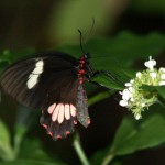 Butterfly at copan ruins