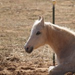 Horse at Best Friends in Kanab Canyon