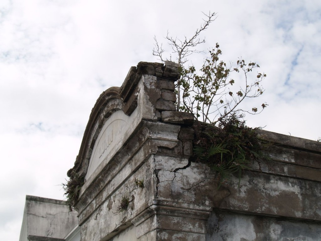 fern on tomb