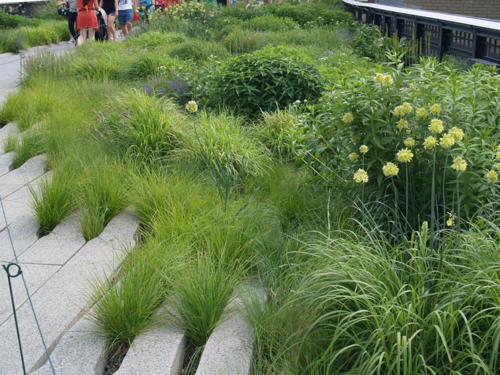 highline plants