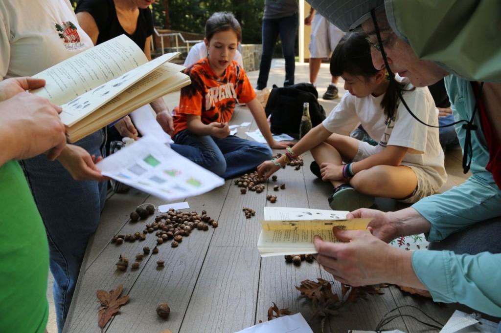 Consulting reference material to identify the acorns