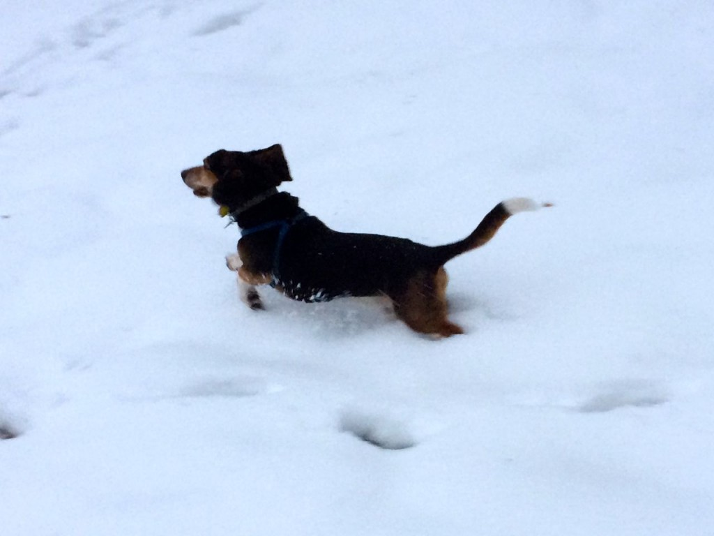 Ferdinand leaping through the snow