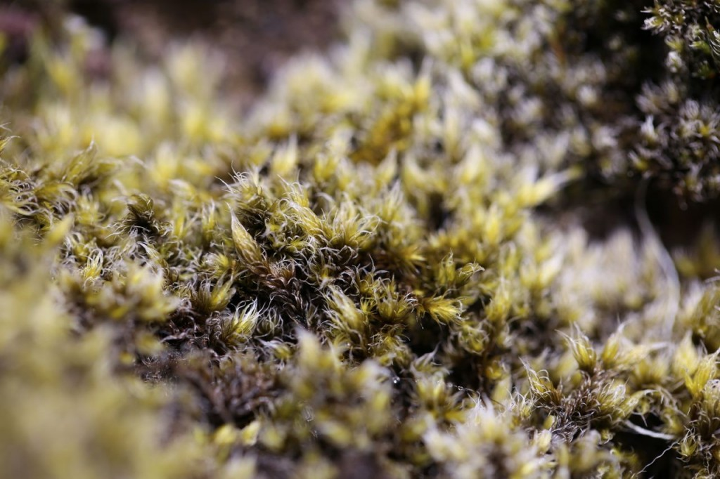 Lichen? Moss? It covers the volcanic rock