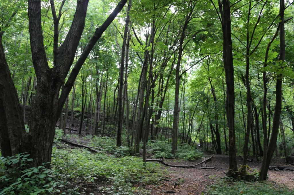 Trails through the park's forest