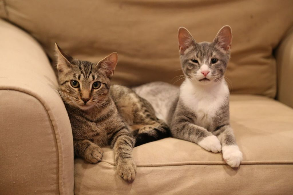 Feste and Orsino relaxing