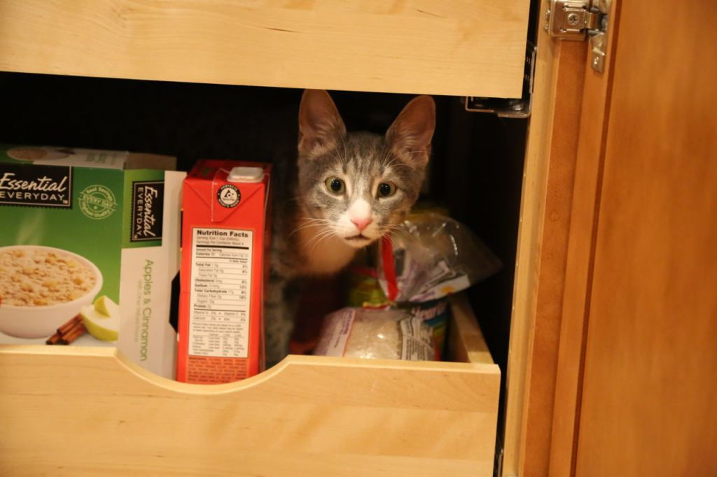 I assume everyone stores their cats in the kitchen pantry next to the soup.