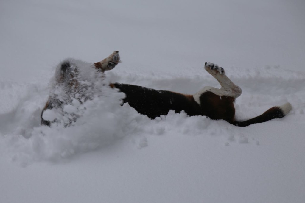 Rolling in the snow
