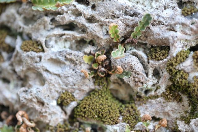 Moss and plant on limestone column