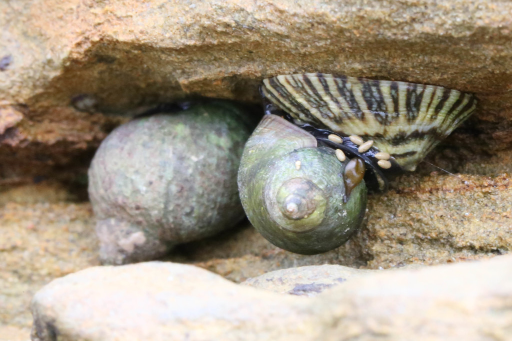 Snails and limpet