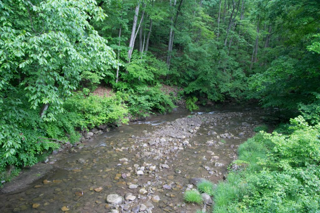 Stream along the Cass Railroad