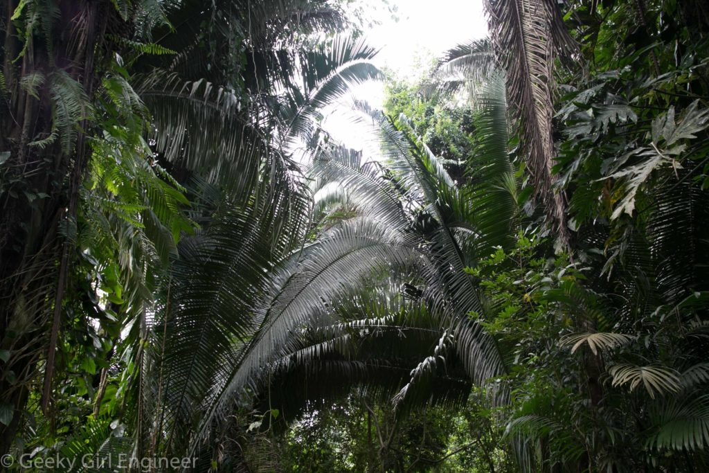 Huge palms create tunnels with the paths