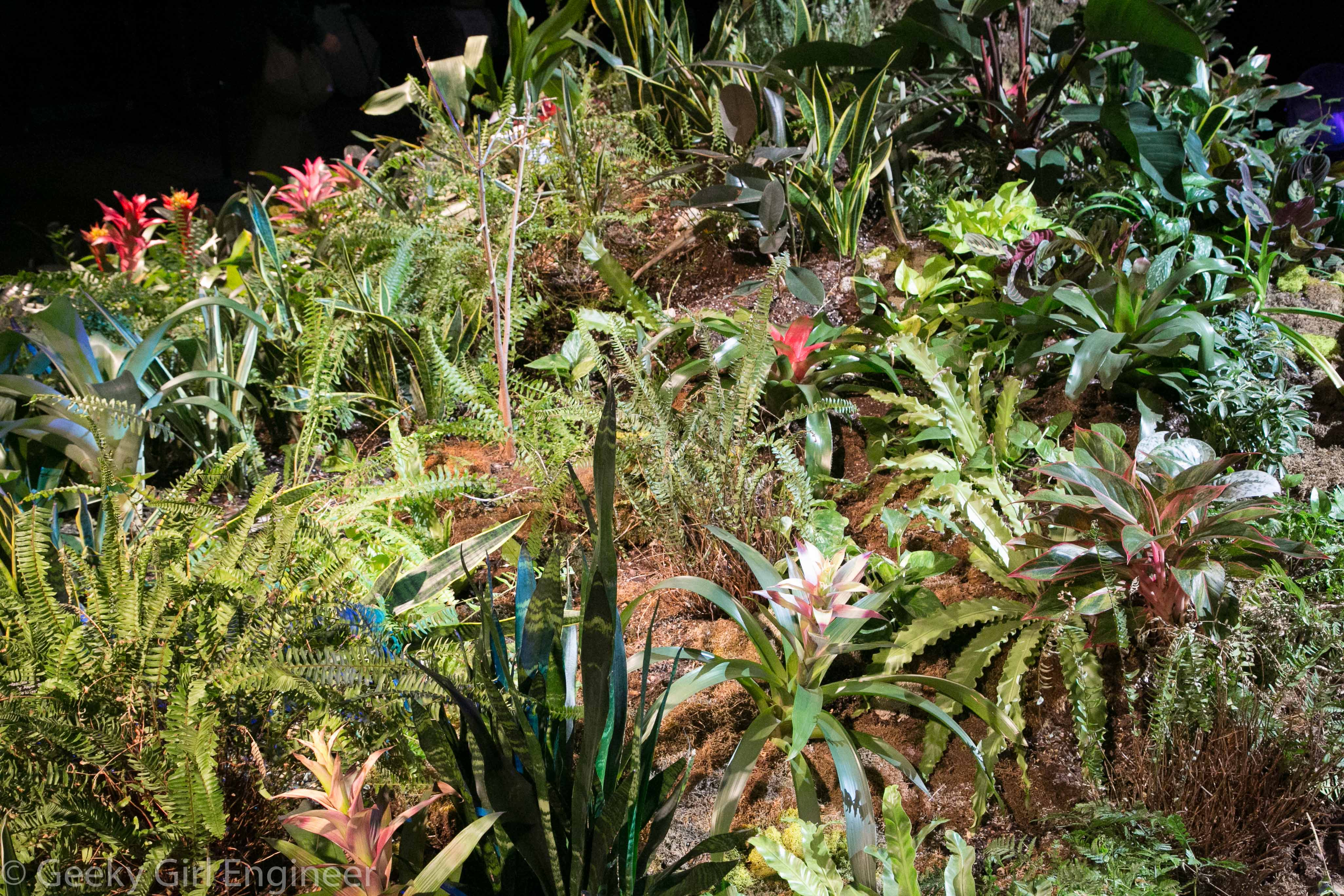 Plants that may be used