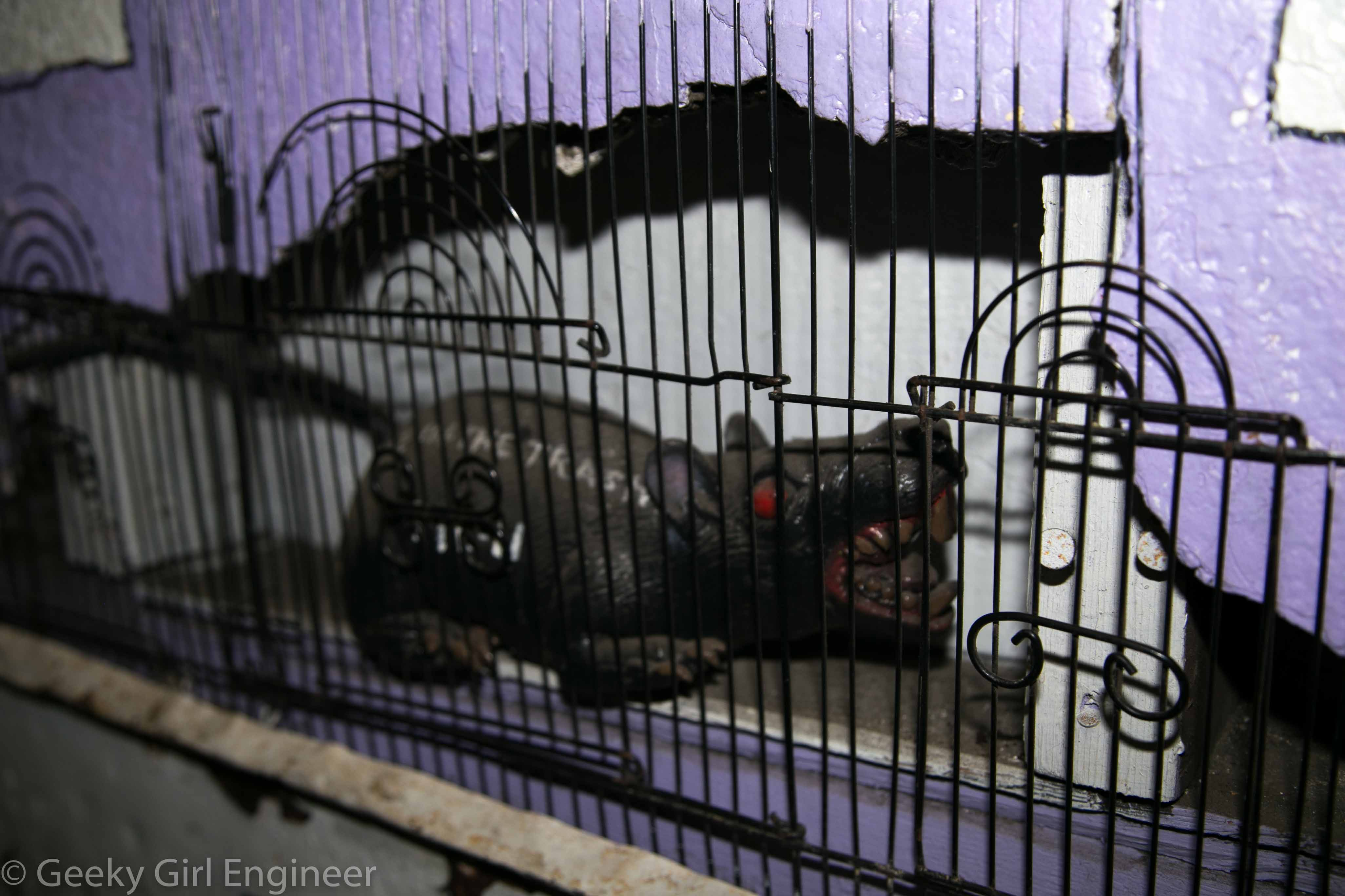 Rat behind a fence in a hole in the wall in the stairwell leading to Trash in the Treasure